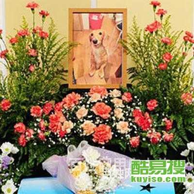 北京延慶寵物火化貓狗后事貓貓死了怎么辦?